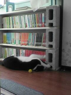 本棚とナフル