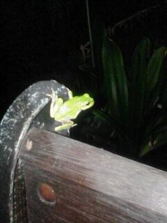 夜は移動するカエル