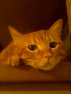 友達が猫の写真を送ってくれたかわいい