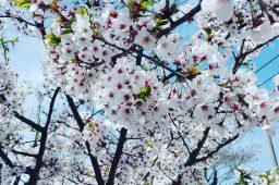5/3 福島の春