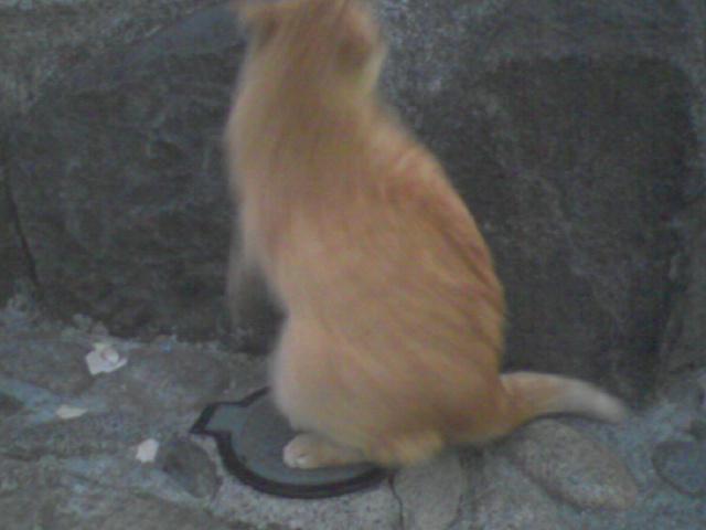 ちゃいろの猫