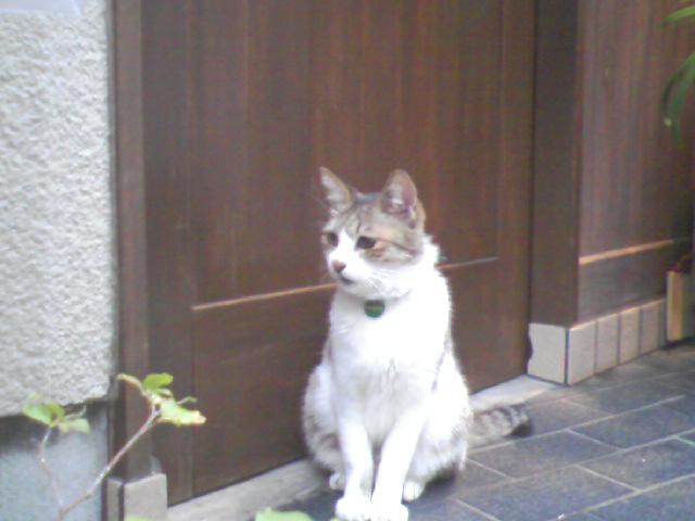 そば屋の猫